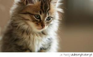 Obrazek użytkownika Pers