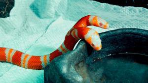Obrazek użytkownika Hydra