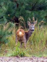 """Nie dajmy się """"totalnym"""" robić w jelenia"""