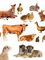 wszystkie zwierzęta są równe
