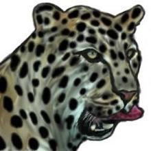Obrazek użytkownika leoparda